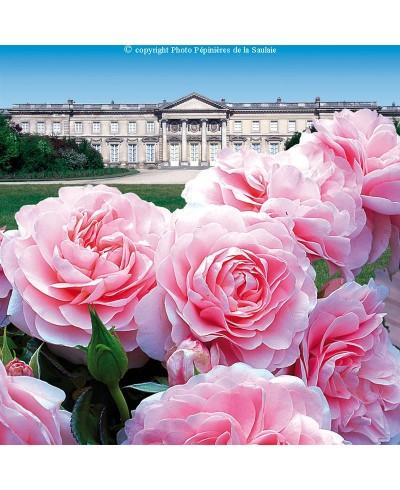 Palais Imperial de Compiègne ®