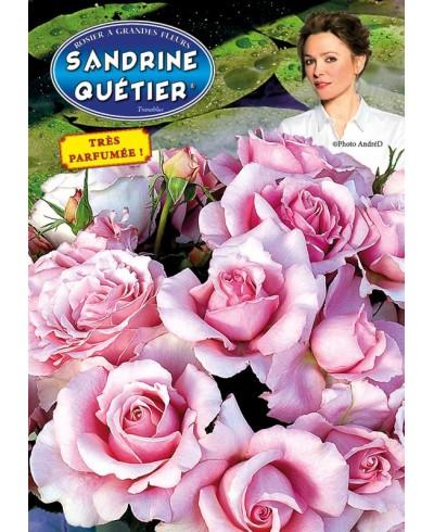 Sandrine Quetier ®